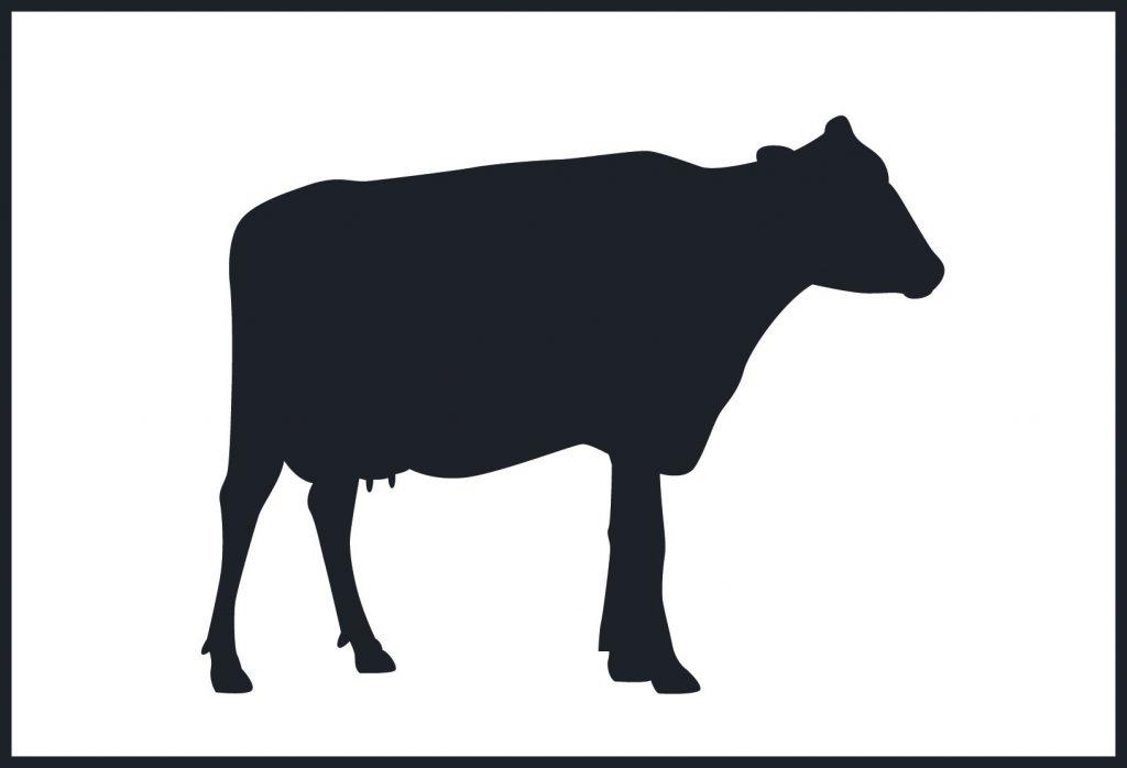 Quesos de leche de vaca